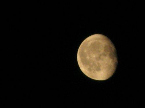夜的思念(图文) - 绿野仙踪 - 绿野仙踪的博客